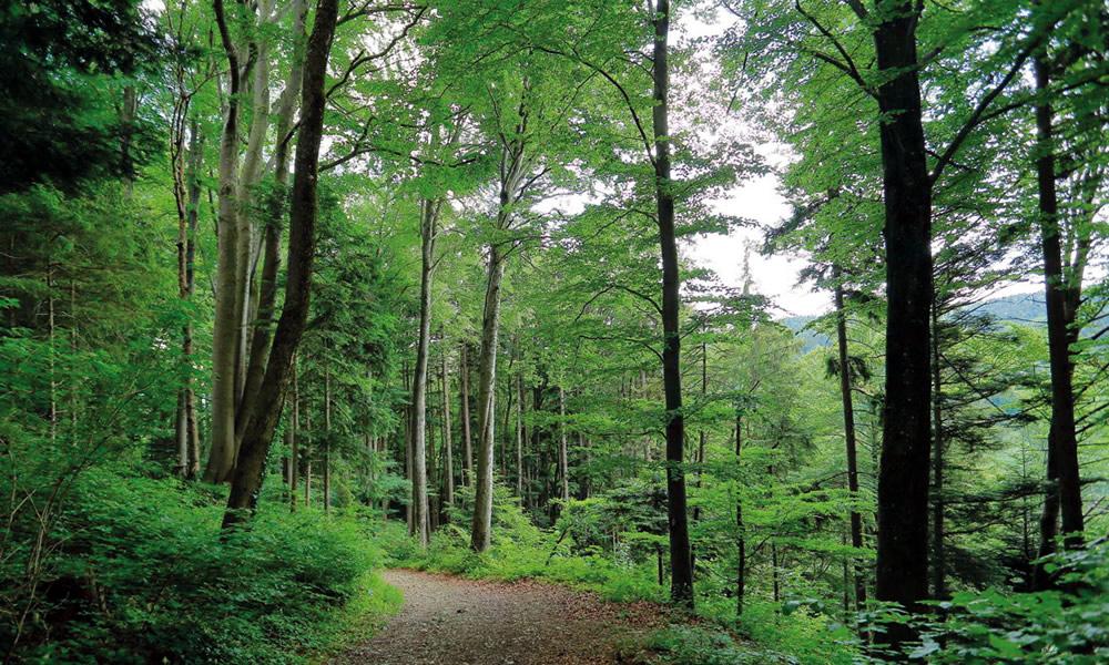 Der Wald – ein Ort der Heilung